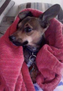 Blankets are cuddly and warm and great, especially when accompanying a puppy.