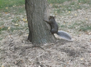 """Spidey-squirrel powers, activate!"""