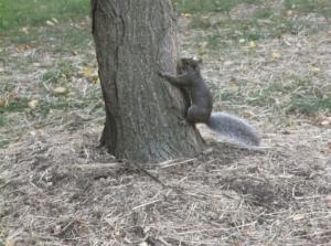"""Spidey-squirrel powers, activate!"""