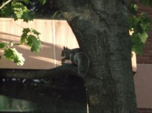 """Just sittin' in a tree...."""