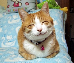 This happy cat agrees.  (Image viahttp://bingeeatingtherapy.com/wp-content/uploads/2013/11/how-to-be-happy.jpg)