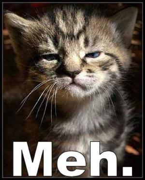 meh_cat